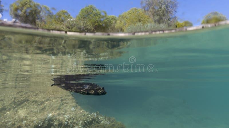 海边kekova在土耳其,假日地方,鱼的图片从水中的 免版税库存照片