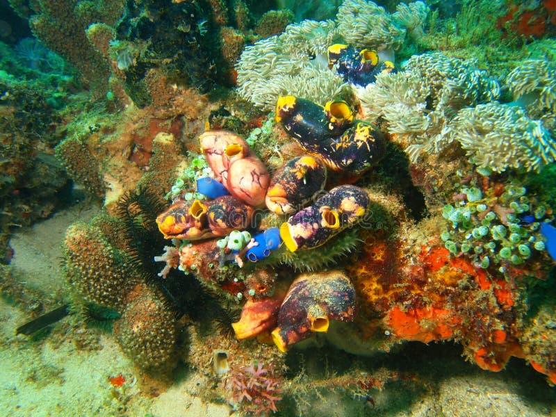 海鞘 库存照片