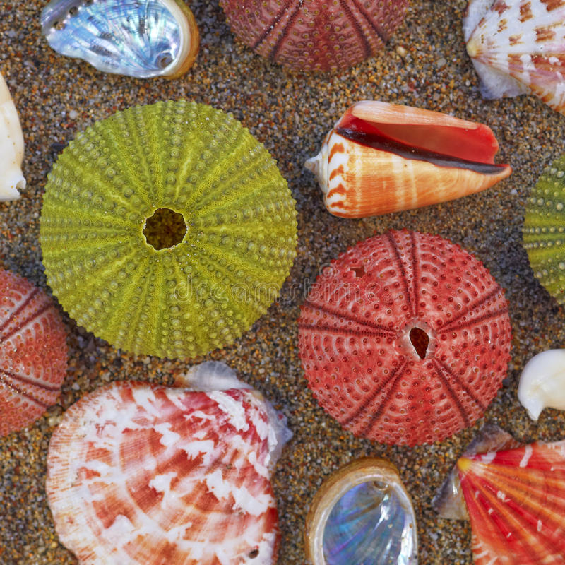 海顽童和壳在海滩 库存照片