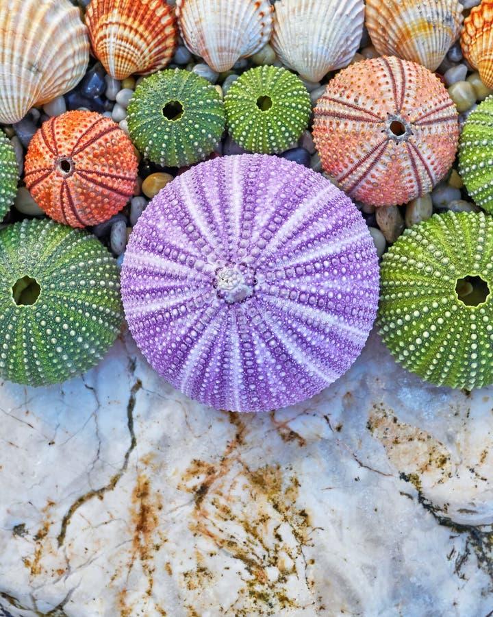 海顽童和壳在白色岩石 库存图片