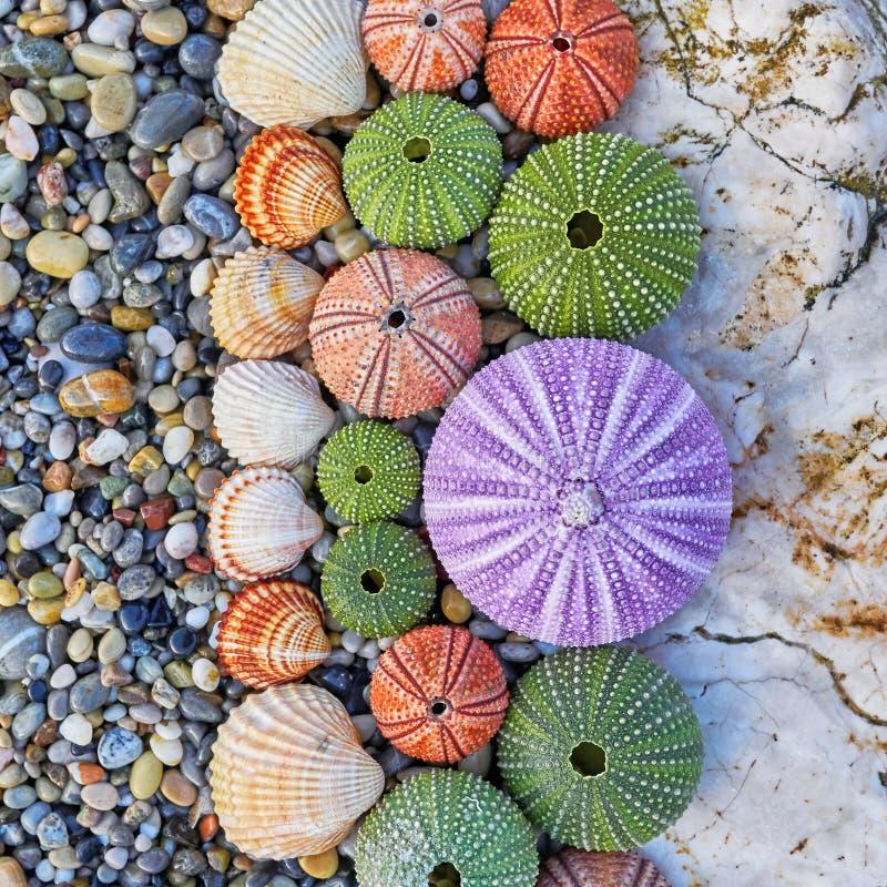 海顽童和壳在白色岩石 图库摄影