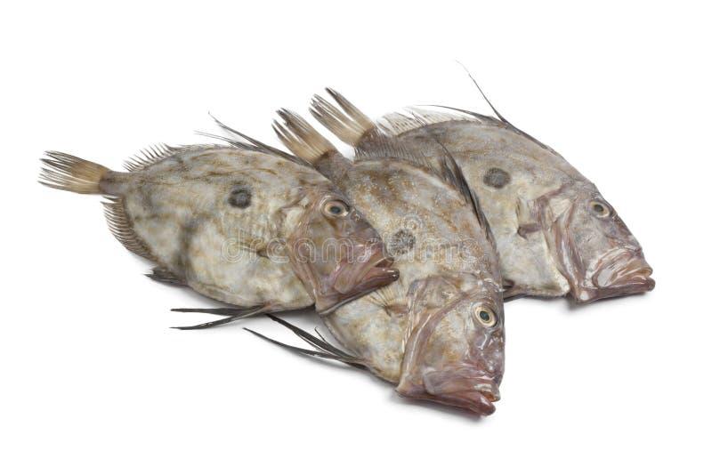 海鲂钓鱼新鲜的约翰 图库摄影