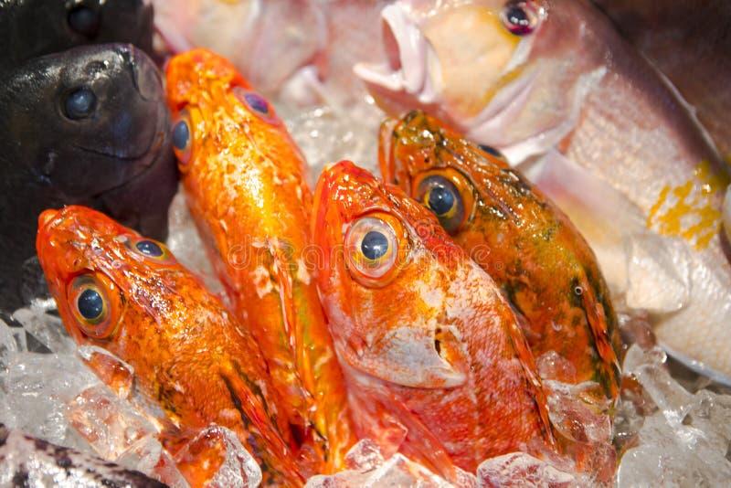 海鲜餐馆,新鲜的海鲜,各种各样的鱼贝类,台湾` s海鲜商店, 免版税库存照片