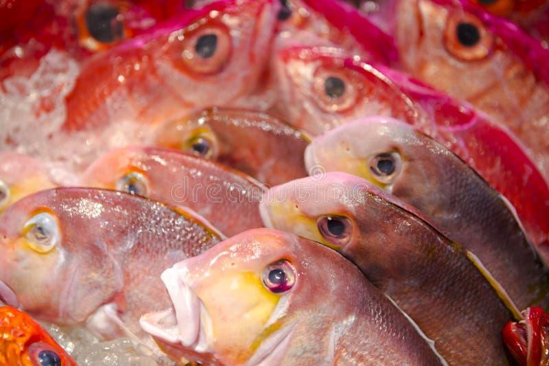 海鲜餐馆,新鲜的海鲜,各种各样的鱼贝类,台湾` s海鲜商店, 库存图片