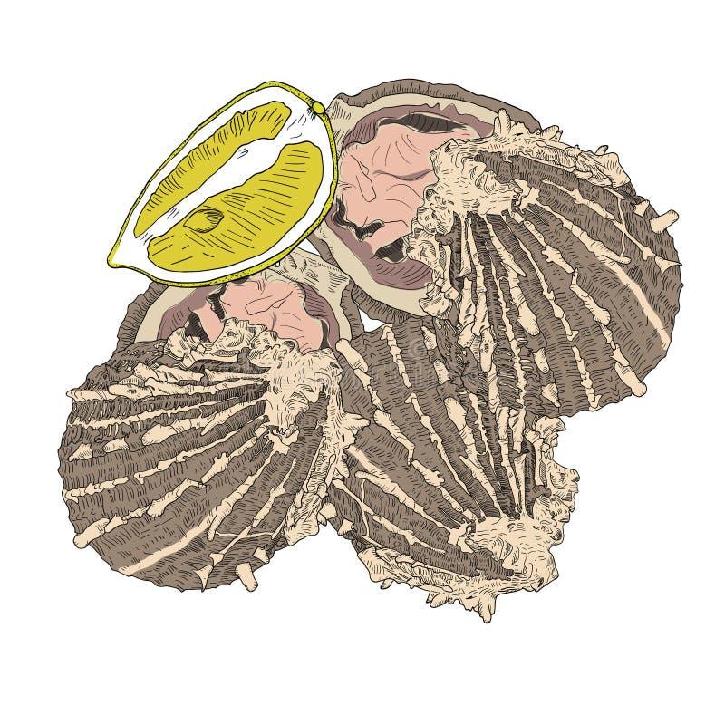 海鲜-被打开的牡蛎用柠檬 手拉五颜六色 向量例证