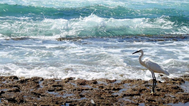 海鸟在夏天 免版税库存照片