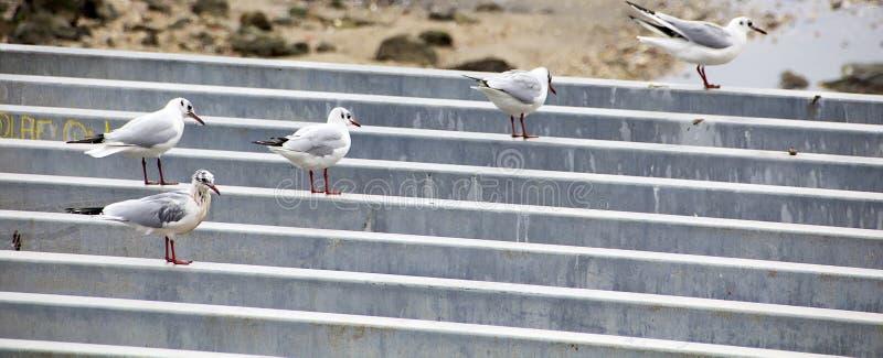 海鸥交响乐 库存照片