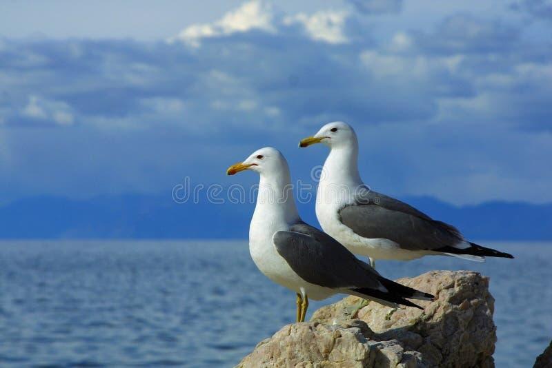 海鸥副天空二 库存照片