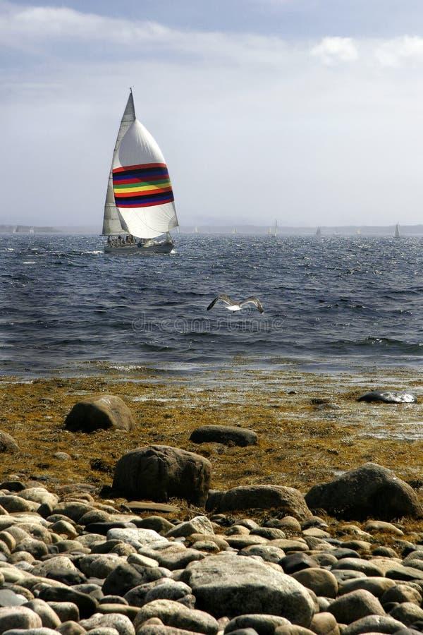 海鸥和大三角帆 图库摄影