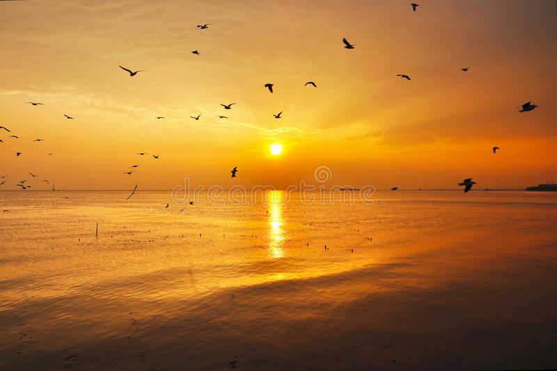 海鸥和日落 图库摄影