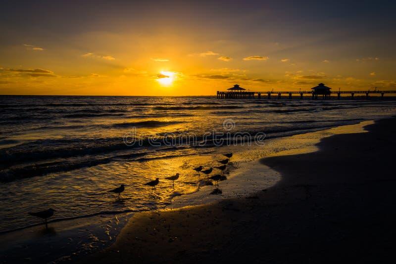 海鸥和渔码头在日落在迈尔斯堡靠岸,佛罗里达 库存照片