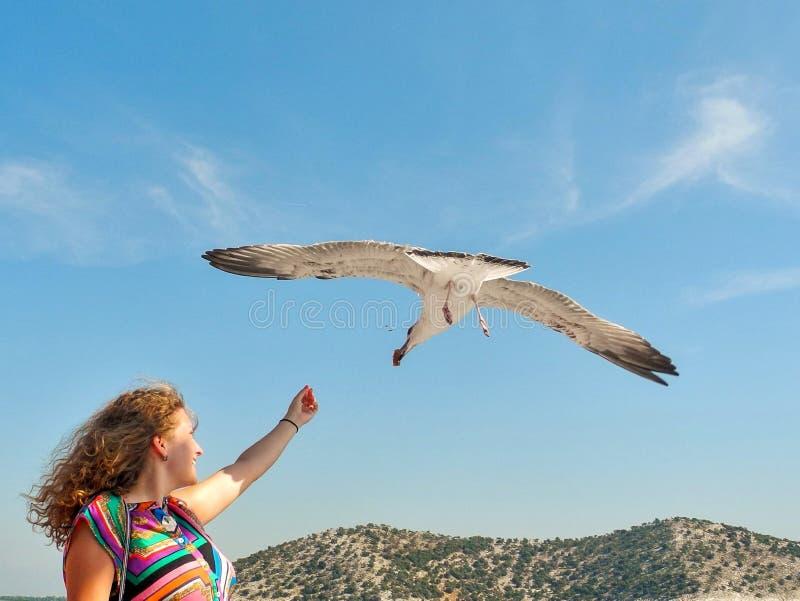 海鸥哺养-非常友好的海鸥采取从女孩的手的面包 免版税库存图片
