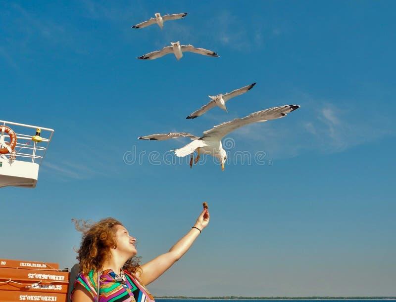 海鸥哺养-非常友好的海鸥采取从女孩的手的面包 库存图片