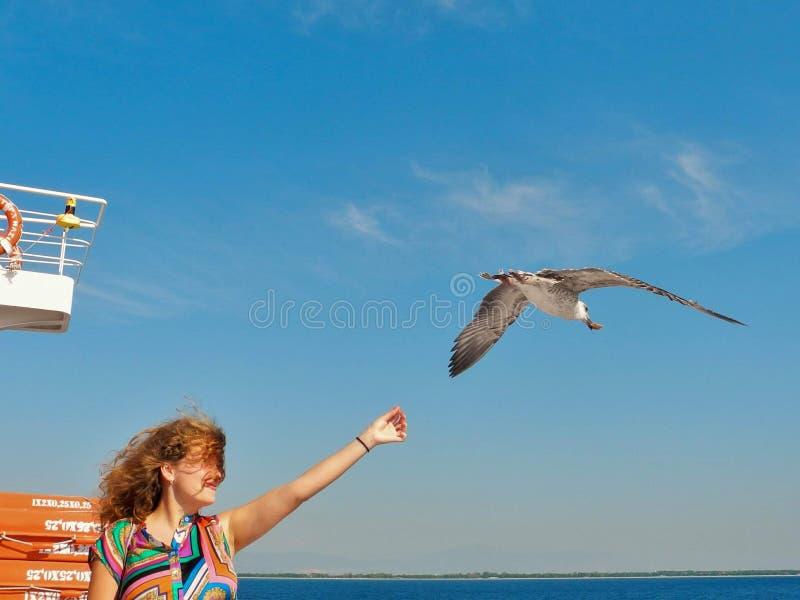 海鸥哺养-非常友好的海鸥采取从女孩的手的面包 图库摄影