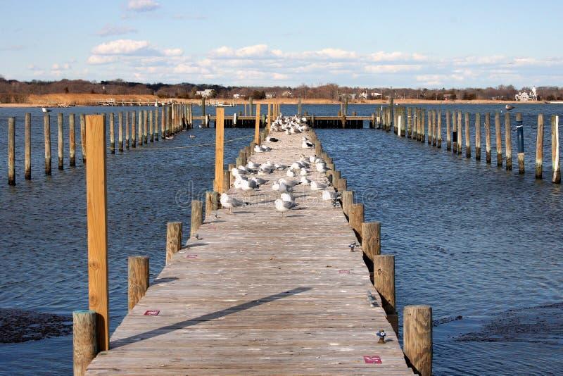 海鸥回归到受欢迎的春天 库存照片
