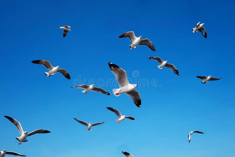 海鸥在与天光的天空飞行 库存照片