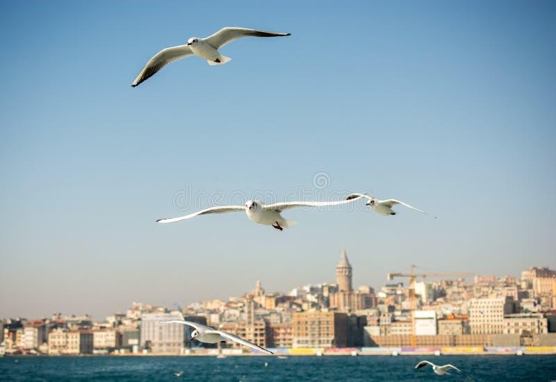 海鸥在天空飞行 免版税库存照片