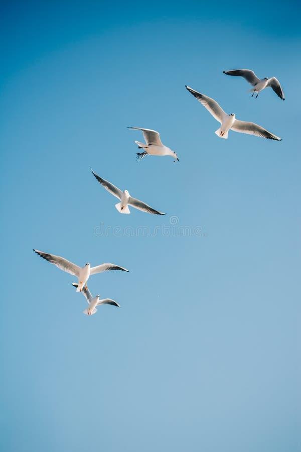 海鸥在天空飞行 库存照片