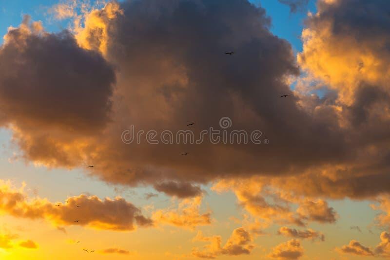 海鸥在奥斯坦德,比利时现出轮廓 库存图片