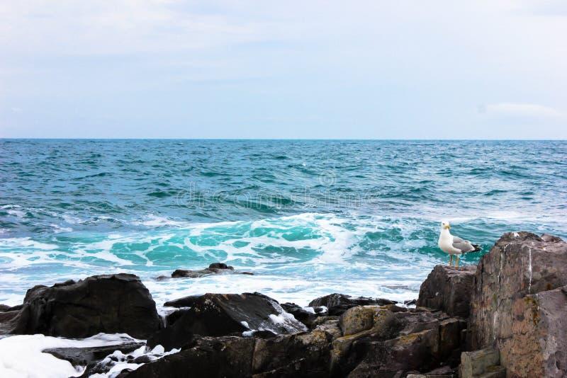 海鸥在岩石栖息在黑海在索佐波尔,保加利亚附近 免版税图库摄影