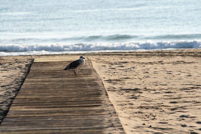 海鸥在海滩沙子的木大厅里 免版税库存图片