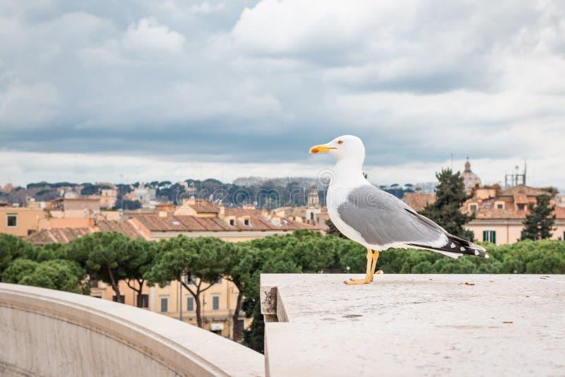 海鸥在罗马 库存照片