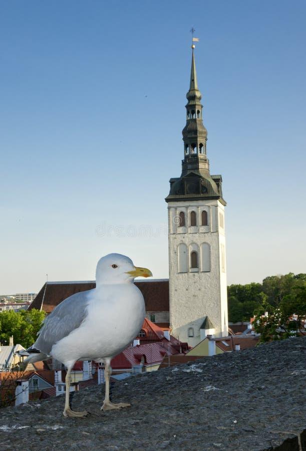海鸥在观景台上,台下的市政厅 塔林 爱沙尼亚 免版税图库摄影