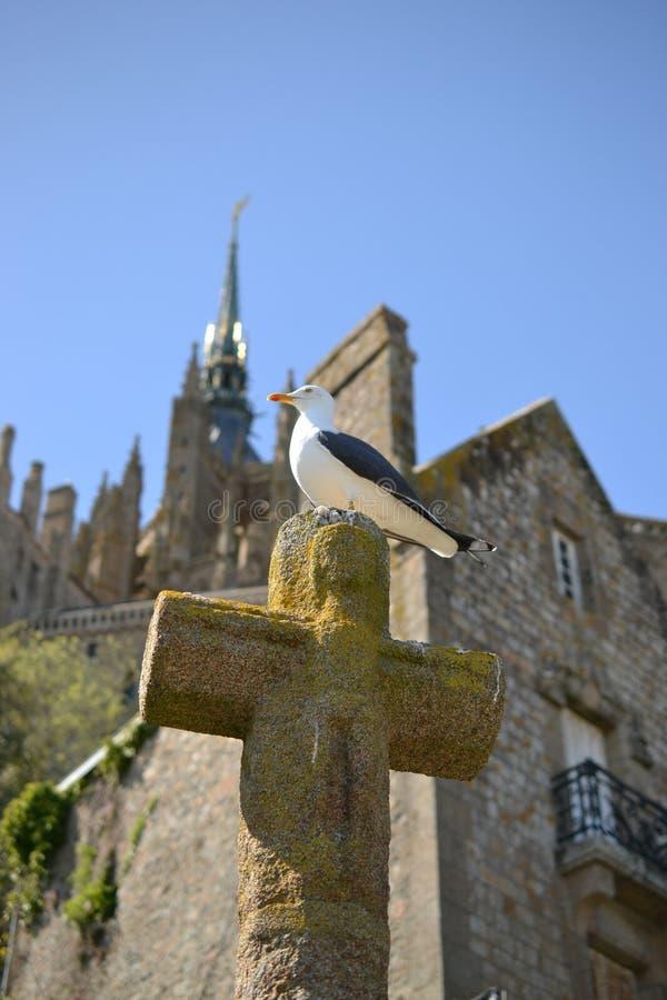 海鸥坐大教堂十字架在Mont圣米歇尔,诺曼底,法国北部,欧洲 库存照片