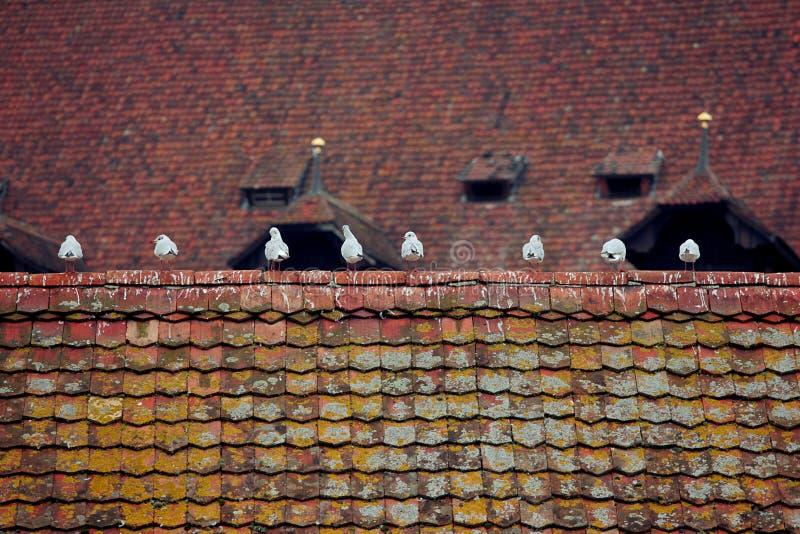 海鸥坐房子的盒盖 免版税库存照片