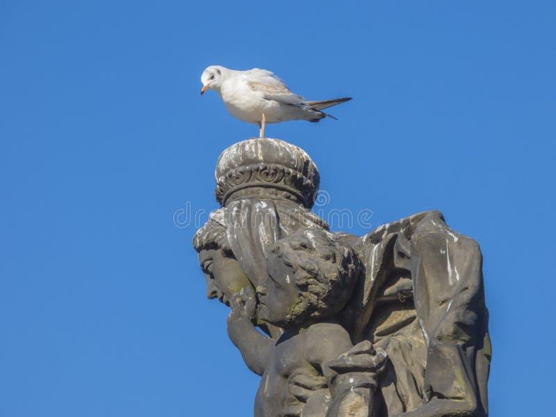 海鸥坐石雕象头 免版税库存图片
