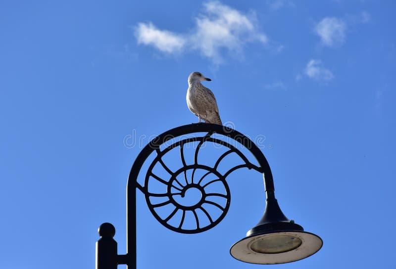 海鸥坐路灯柱在莱姆里杰斯,多西特 库存图片