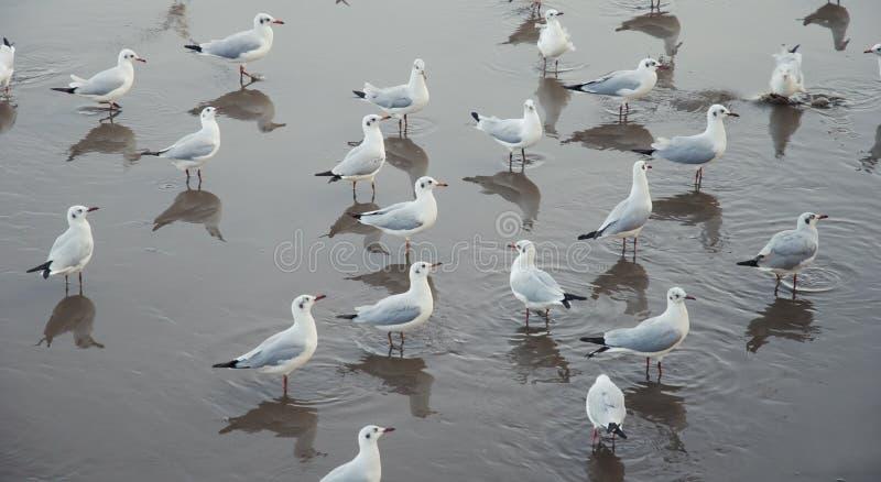 海鸥样式 库存照片