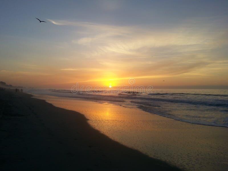 海鸥沿岸飞行在日出 免版税库存照片