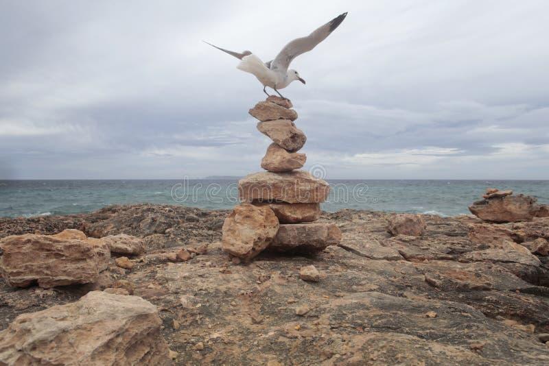 海鸥登陆了在majorca海岛的南海岸的石登上  免版税库存图片