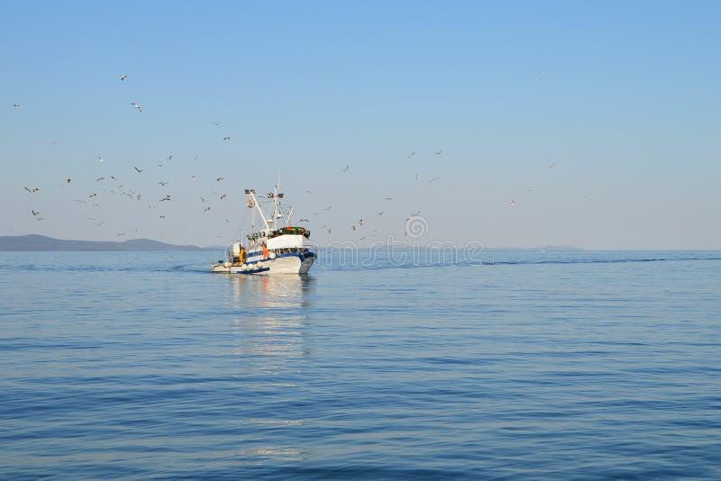 海鸥群跟随的渔船 库存图片