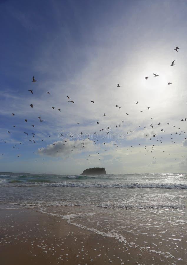 海鸥群飞行在头顶上在神秘主义者海滩 库存照片