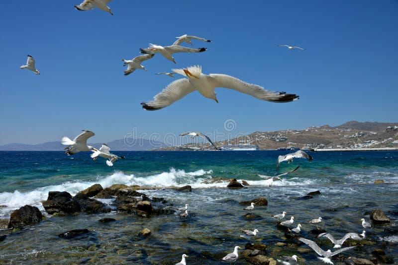 海鸥飞行和其他在水中 科斯塔Deliziosa被停泊的游轮后边 免版税库存照片