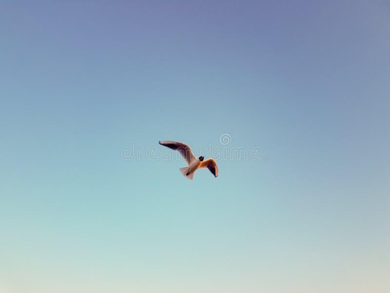 海鸥飞行在一个夏日 库存照片