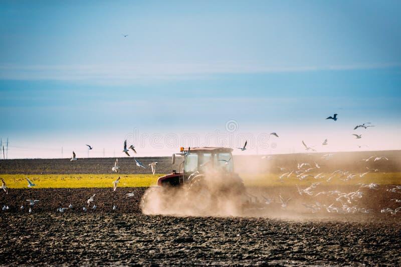 海鸥鸟群在犁领域的拖拉机后飞行  免版税库存图片