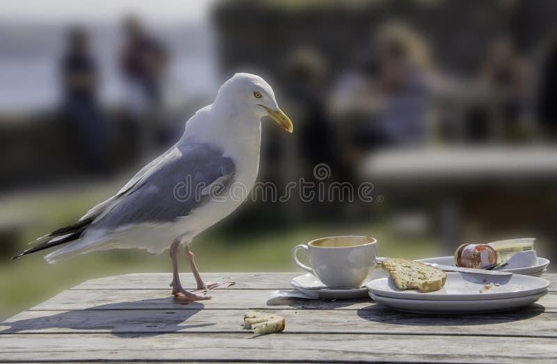 海鸥-未看见的现实