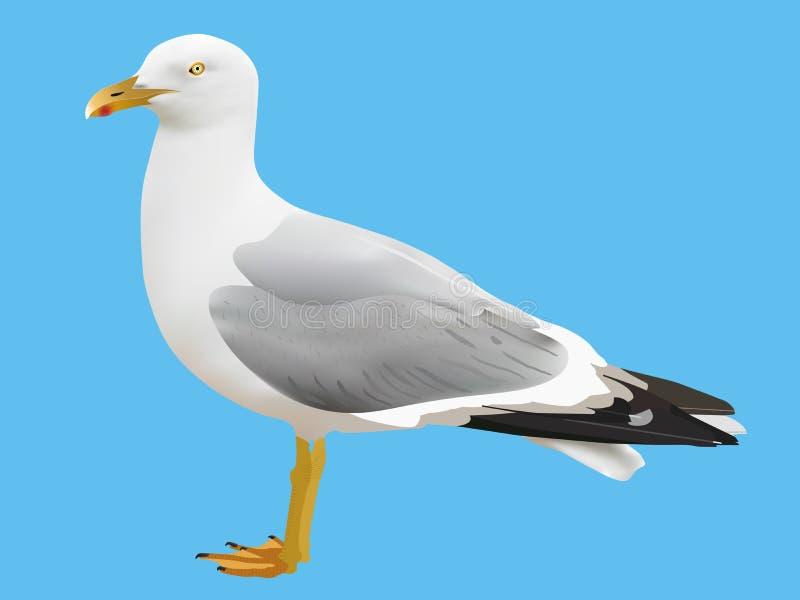 海鸥 皇族释放例证