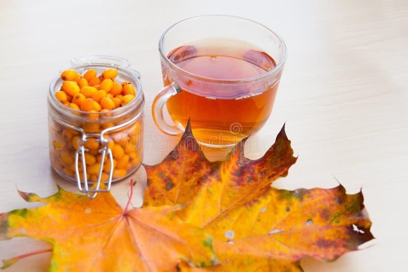 海鼠李莓果和秋叶,替代医学 免版税库存图片