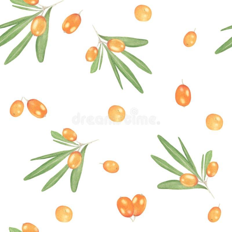 海鼠李莓果无缝的样式 图库摄影
