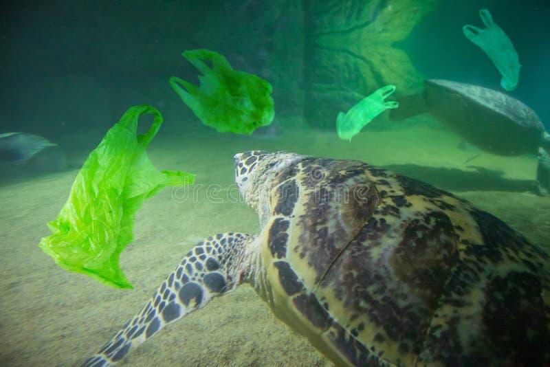 海龟吃塑料袋海洋污染概念 库存图片
