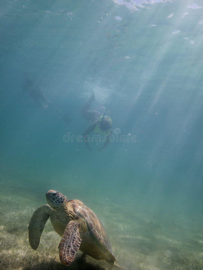 海龟和潜水者 库存照片