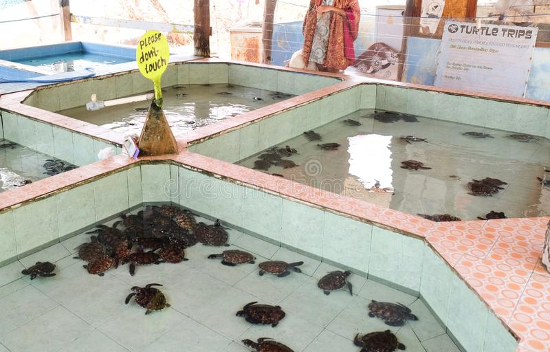 海龟圣所在Gili梅诺海岛,印度尼西亚 库存照片