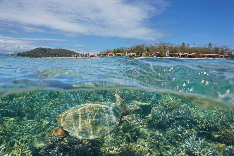 海龟水下的谬传小岛新喀里多尼亚 免版税库存照片
