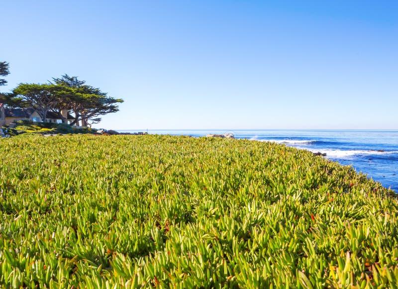 海滩 加利福尼亚carmel 库存照片