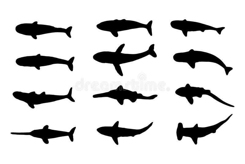 海洋动物(鲨鱼和鲸鱼) 库存图片