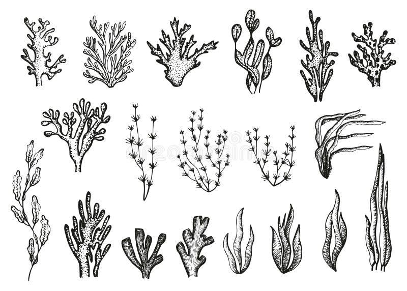 海藻和珊瑚被设置的剪影传染媒介 向量例证
